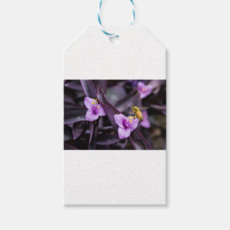 Bee on Flower Pack Of Gift Tags