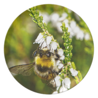 Bee on Lucky White Heather Dinner Plates