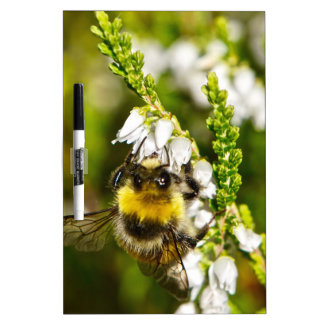 Bee on Lucky White Heather Dry Erase Board