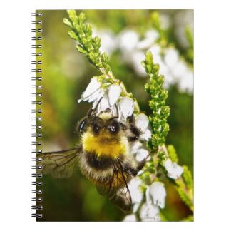 Bee on Lucky White Heather Notebooks
