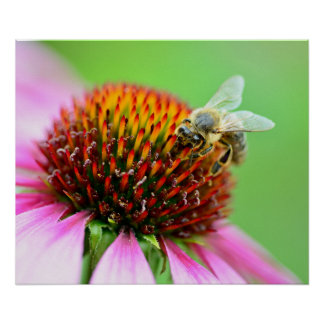 Bee on purple flower poster