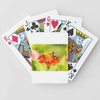 bee on red flower with pollen sacs bicycle playing cards