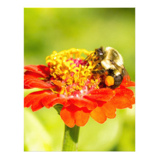 bee on red flower with pollen sacs letterhead