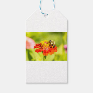 bee on red flower with pollen sacs pack of gift tags