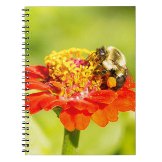 bee on red flower with pollen sacs spiral note book