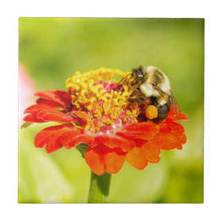 bee on red flower with pollen sacs tile