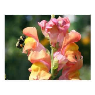 Bee On Snapdragon Flower Photo Postcard