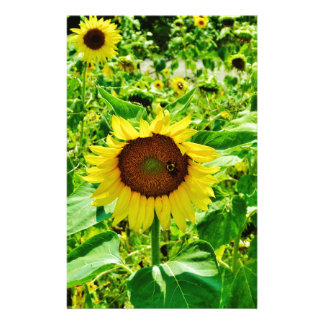 Bee on yellow Sunflower Stationery Paper