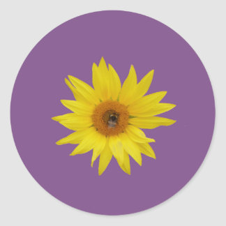 Bee on yellow sunflower with purple background classic round sticker