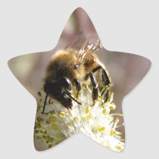 Bee Pollinator Star Sticker