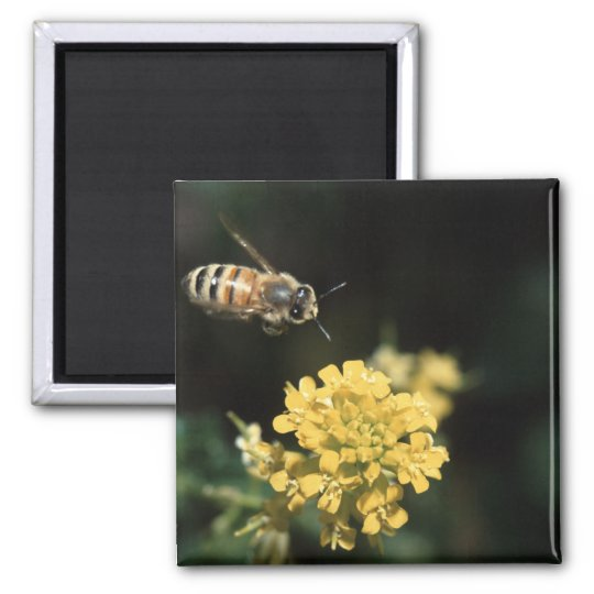 bee square magnet