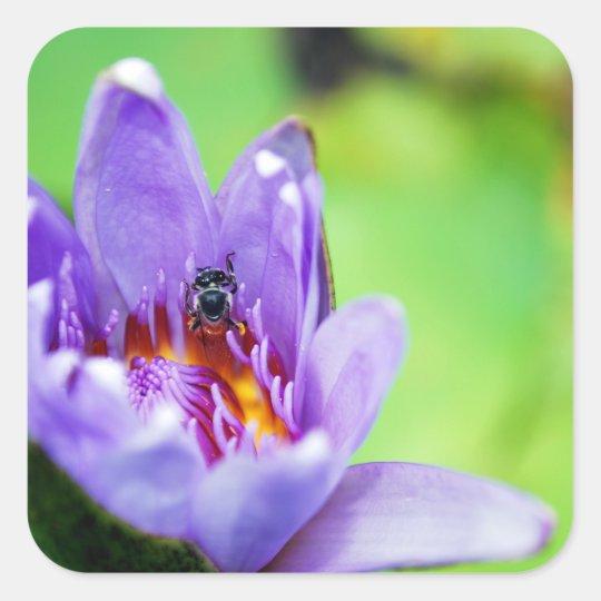 Bee Square Sticker