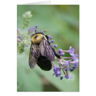Bee-utiful Bee! Card