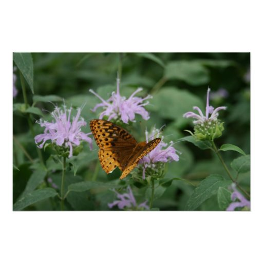 Beebalm and Butterfly Poster