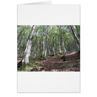 Beech forest landscape in summer . Tuscany, Italy Card
