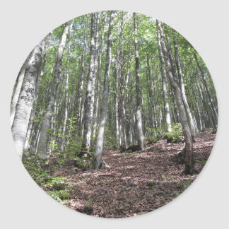 Beech forest landscape in summer . Tuscany, Italy Classic Round Sticker
