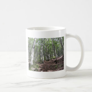 Beech forest landscape in summer . Tuscany, Italy Coffee Mug