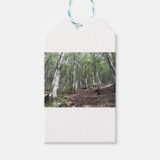 Beech forest landscape in summer . Tuscany, Italy Gift Tags