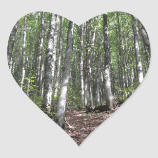 Beech forest landscape in summer . Tuscany, Italy Heart Sticker