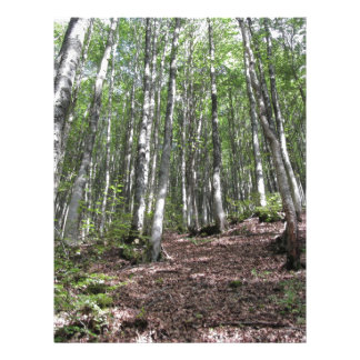 Beech forest landscape in summer . Tuscany, Italy Letterhead