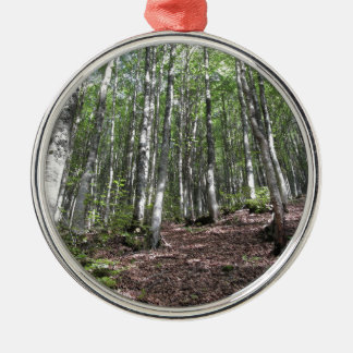 Beech forest landscape in summer . Tuscany, Italy Metal Ornament