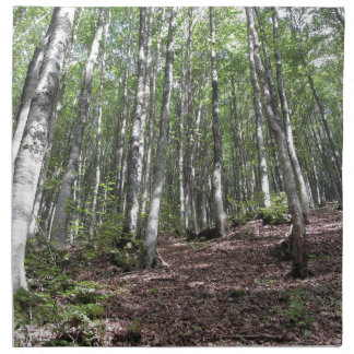 Beech forest landscape in summer . Tuscany, Italy Napkin
