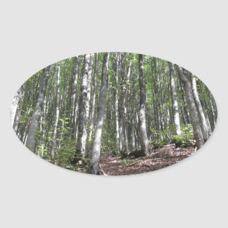 Beech forest landscape in summer . Tuscany, Italy Oval Sticker