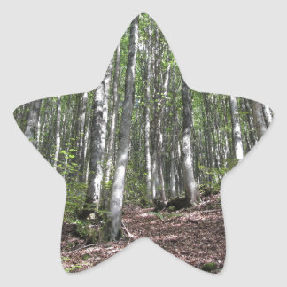 Beech forest landscape in summer . Tuscany, Italy Star Sticker