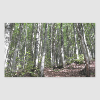 Beech forest landscape in summer . Tuscany, Italy Sticker