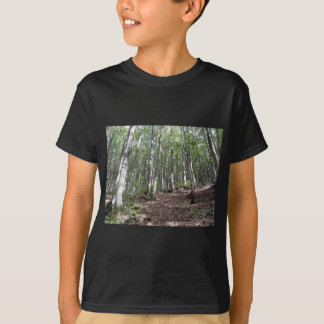 Beech forest landscape in summer . Tuscany, Italy T-Shirt