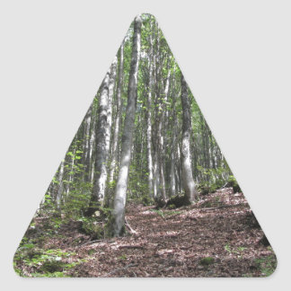 Beech forest landscape in summer . Tuscany, Italy Triangle Sticker