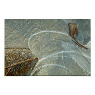 Beech leaf in ice poster