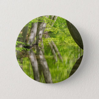 Beech tree trunks with water in spring forest 2 inch round button