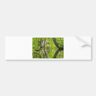 Beech tree trunks with water in spring forest bumper sticker