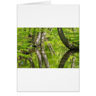 Beech tree trunks with water in spring forest card