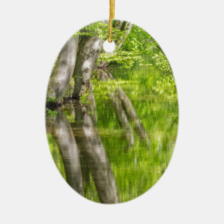 Beech tree trunks with water in spring forest ceramic oval ornament