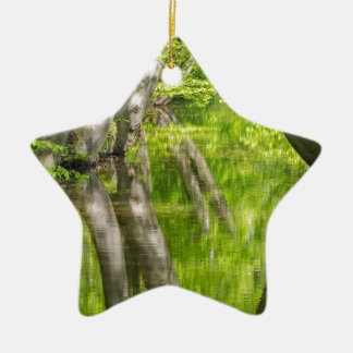 Beech tree trunks with water in spring forest ceramic star ornament
