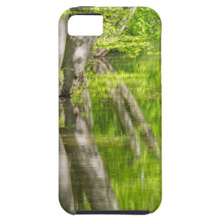 Beech tree trunks with water in spring forest iPhone 5 covers