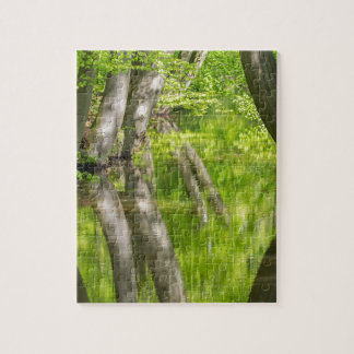Beech tree trunks with water in spring forest jigsaw puzzle