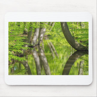 Beech tree trunks with water in spring forest mouse pad