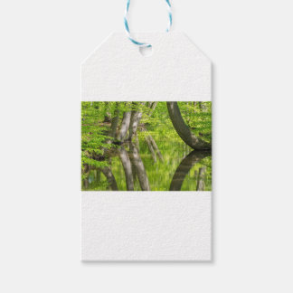 Beech tree trunks with water in spring forest pack of gift tags