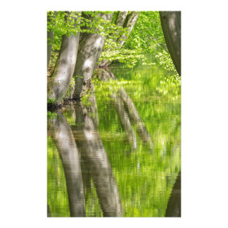Beech tree trunks with water in spring forest stationery