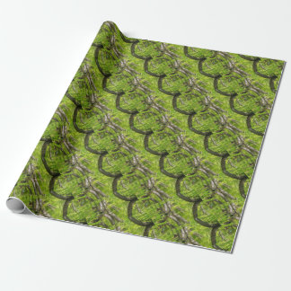 Beech tree trunks with water in spring forest wrapping paper