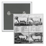 Beef, Veal, Pork, and Mutton Cuts, 1802 2 Inch Square Button