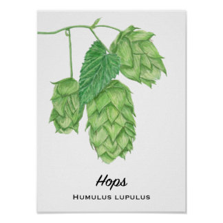 Beer Hops Watercolor Painting Poster