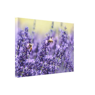 Bees and Lavender Canvas Print