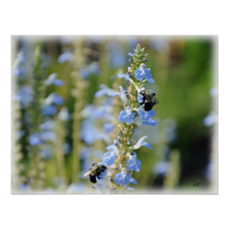 Bees and Sky Blue Sage Poster