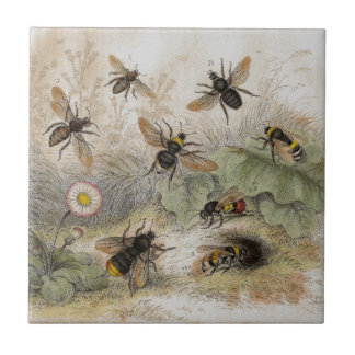 Bees Antique Lithograph print tile