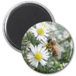 Bees Honey Bee Wildflowers Flowers Daisies Photo 2 Inch Round Magnet