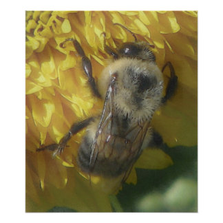 bees love yellow...[watercolour] poster
